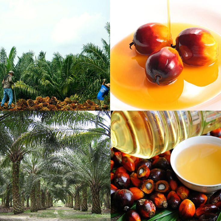Aceite de Palma: ¿Es Bueno O Malo Para Tu Salud Y la Deforestación?   La Guía de las Vitaminas