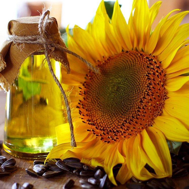 La Verdad Sobre El Aceite De Girasol   La Guía de las Vitaminas