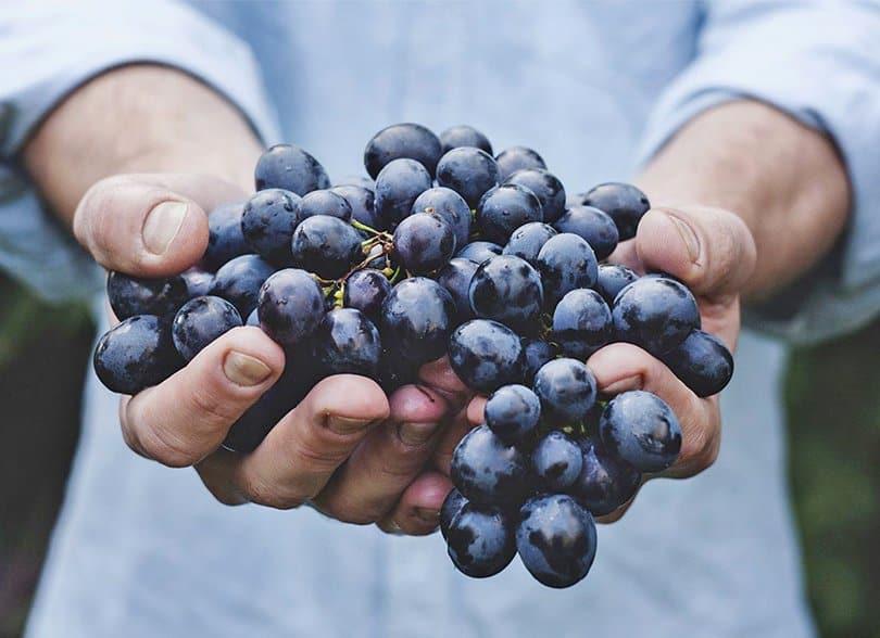 Uvas: Beneficios, Datos Nutrimentales, Peligros Y Receta   La Guía de las Vitaminas