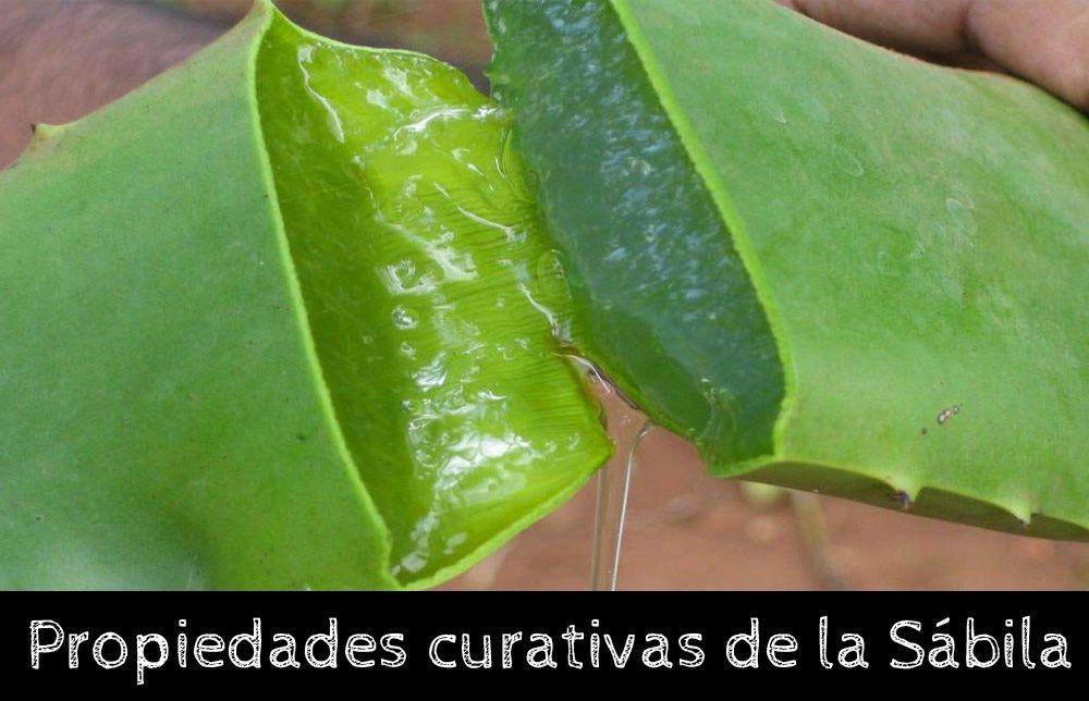 10 Propiedades Curativas Y Beneficios de la Sábila o Aloe Vera   La Guía de las Vitaminas