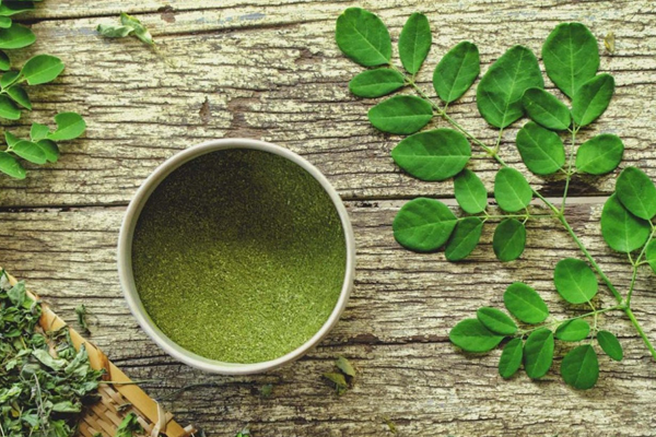moringa oleífera antinflamatório