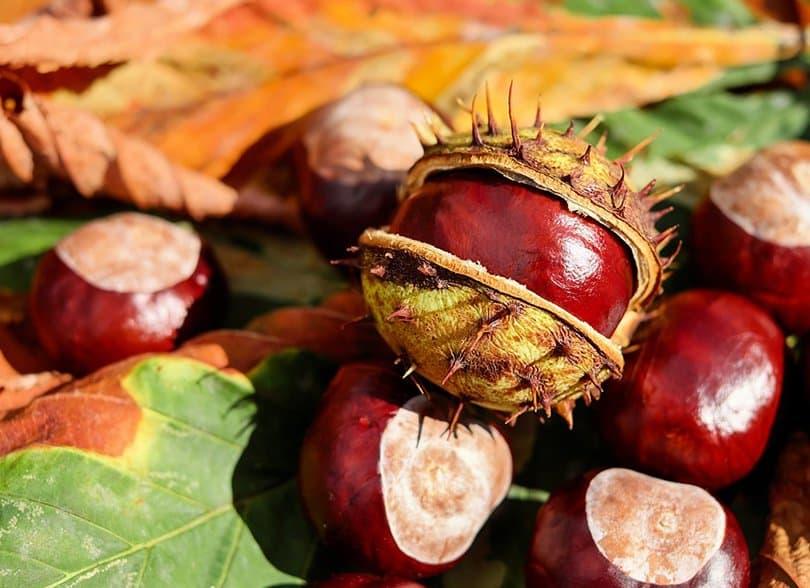 Castaño De Indias: Para Qué Sirve, Suplementos, Beneficios Y Precauciones   La Guía de las Vitaminas