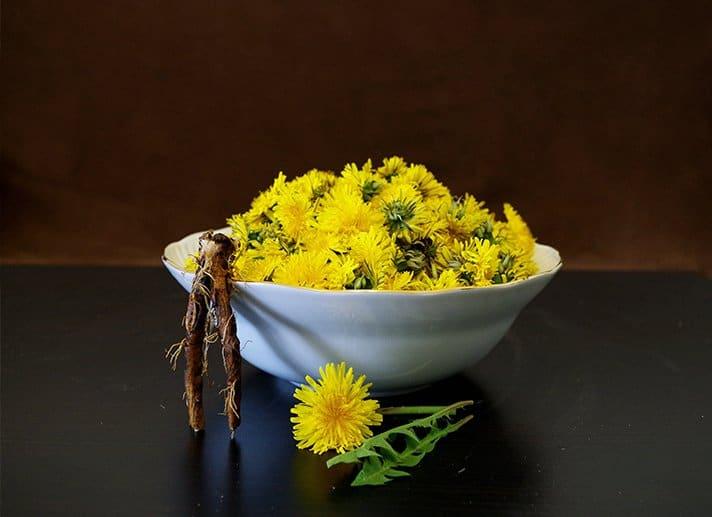 Diente de León Para el Cáncer: ¿Ayuda en Algo o No?   La Guía de las Vitaminas