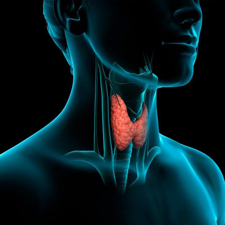 10 Alimentos Prohibidos Si Padeces Hipotiroidismo   La Guía de las Vitaminas